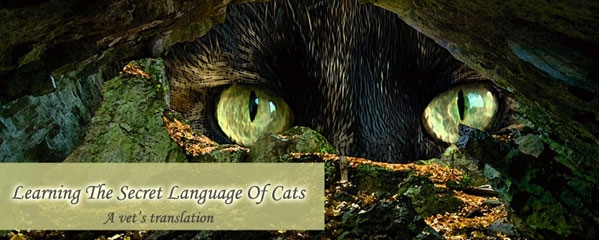 Learning the Secret Language of Cats by Carol Teed